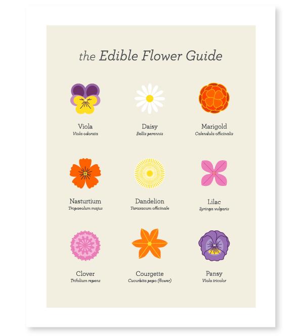 Edible Flower Guide
